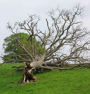 history tree.jpg